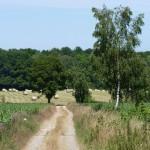 Chemin rural été 2016