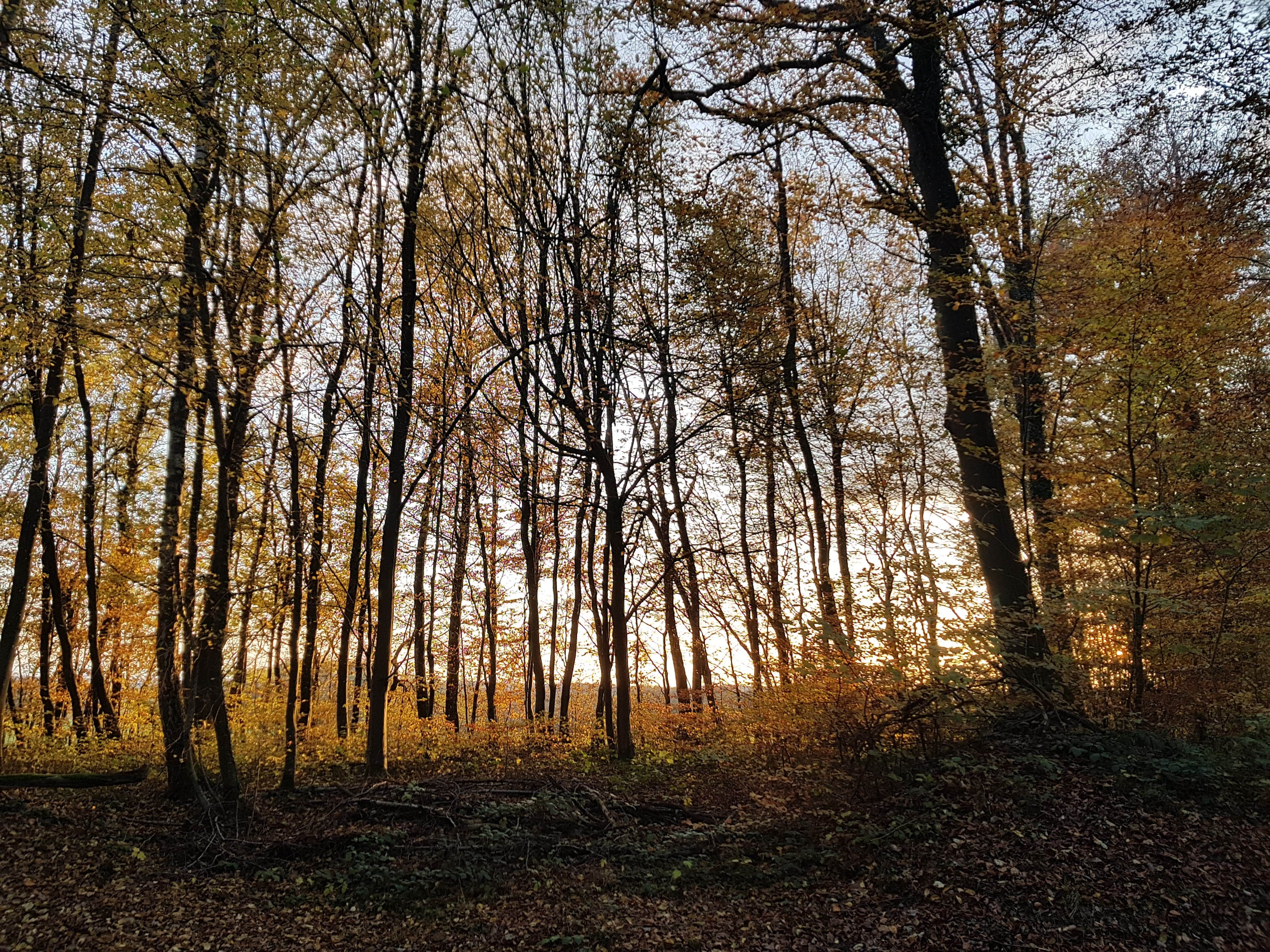 foret automnale 2